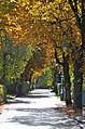 Poertschach Elisabethstrasse im Herbstkleid 11102013 244.jpg