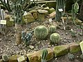 Poland. Warsaw. Powsin. Botanical Garden 138.jpg