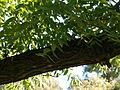 Poltava Botanical garden (72).jpg