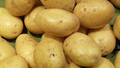 Lenticels on potatoes of the Monalisa variety