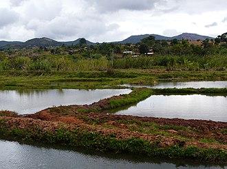 Ruvuma Region - Ponds in Songea
