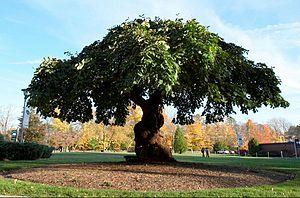 Post University - Post University Tree