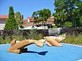 Prenzlau LaGa 2013 - Delphinen (Dolphins) - geo.hlipp.de - 37479.jpg