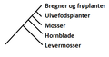 PrimitivePlanterCladogram.png