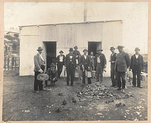 Rat-catcher - Professional rat-catchers behind a pile of dead rats, during the outbreak of bubonic plague in Sydney in 1900