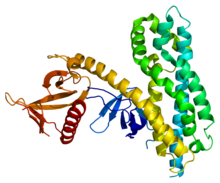 Protein ARHGEF4 PDB 2dx1.png
