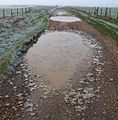 Puddles near Stonehenge - geograph.org.uk - 1621223.jpg
