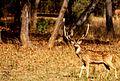 Pulkit raja wildlife photography.jpg