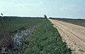 Puszta drained for crops Laltha Dyke. Neusiedl. 1965 (24442137838).jpg