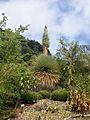 Puya raimondii blooming (14509158407).jpg