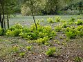 QTA- Vegetación propia de un terreno irrigado (23222496173) (2).jpg
