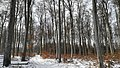 Račice-Pístovice - les západně od obce obr01.jpg