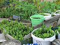 Rabot-BlaisantvestUrbanGardeningGentBelgium2009 10 00 161.jpg