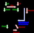 Radiologist algorithm for pulmonary embolism.png