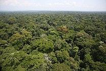 Store skovområder (Ituriskoven til venstre) ved eller i nærheden af Kongofloden (til højre) indgår i mange grundlæggende opfattelser af Centralafrika.