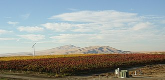 Benton County, Washington - Kiona Vineyard in the Red Mountain AVA looking northwest toward Rattlesnake Mountain. Two varieties of grapes are evident on a crisp autumn day.
