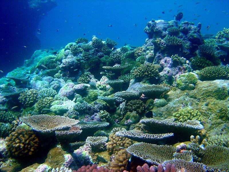 Reef1448 - Flickr - NOAA Photo Library.jpg