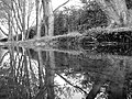 Reflections in a puddle. (7151981887).jpg