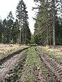 Reinhardswaldradweg problemweg moeglicher abstecher zum urwald ds 04 2009.jpg