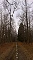 Reinstein Woods Nature Preserve, December 2016.jpg