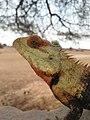 Reptile eligator.jpg