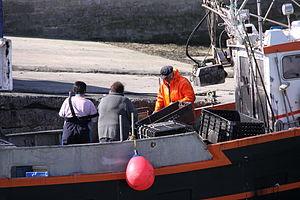 Retour de la pêche à la seiche du fileyeur Jason IV (34).JPG
