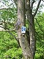 Rheinsteig Hammerstein.jpg