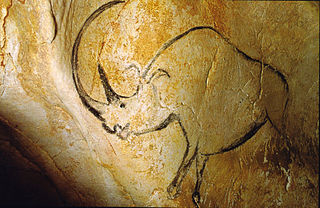 Rhinoceros in the Chauvet Cave