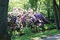 Rhododendronpark Bremen 20090513 015.JPG