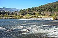 Rio Mondego - Portugal (50610858488).jpg