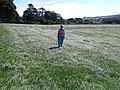 Rippling Grass on driveway to Bolton Hall - geograph.org.uk - 541000.jpg