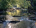 River Greta in summer - geograph.org.uk - 1191612.jpg
