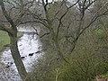 River Tees - geograph.org.uk - 6750.jpg