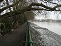 River Thames by Bishop's Park - geograph.org.uk - 1088471.jpg