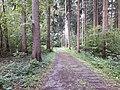 Rodungsweg Hönggerberg.jpg