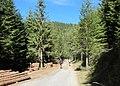 Rolling down among logs - panoramio.jpg