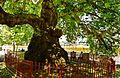 Rrapi Prizren1.jpg