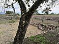 Ruïnes de Kuntur Wasi02.jpg