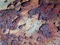 Rust-flake-macro.jpg