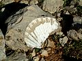 Sabine Beckmann Fossilized large shell above Katharo E at 1410m 4 05.jpg