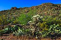 Saguaro Nat. Park near Tuscon, Ariz (15987266557).jpg