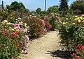 San Jose Heritage Rose Garden view 2.jpg