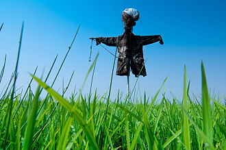Animal repellent - Scarecrow in a field