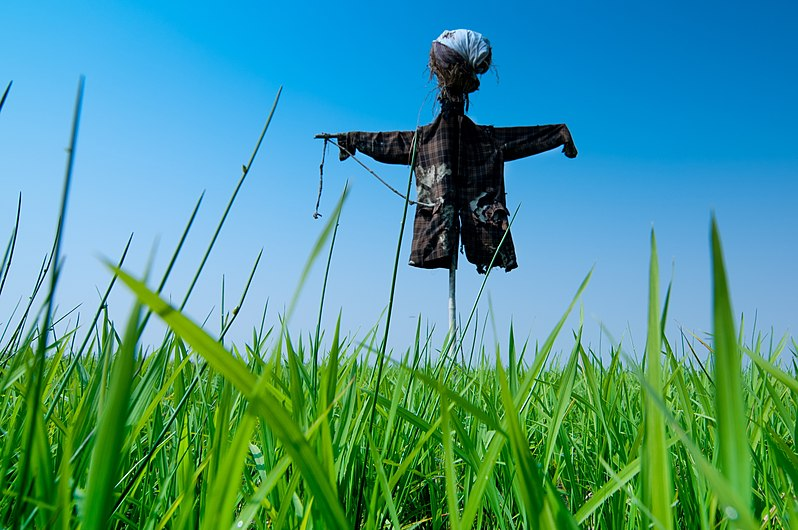 Scarecrow in field.jpg