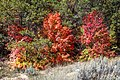 Scenic fall colours along Utah Hwy 14 - (22188571354).jpg