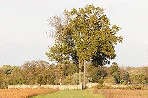 Washington Road Elm Allée - The cemetery, as seen from the Elm Allée