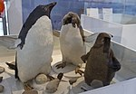 """Se inauguró """"Argentina en Antártida"""" en el Museo Malvinas (21757117442).jpg"""