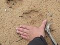 Seney National Wildlife Refuge (5796335035).jpg