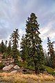 Sequoia National Forest (48886764246).jpg