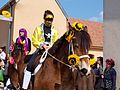 Sergines-FR-89-carnaval 2017-chevaux-02.jpg